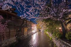 Gion - Kyoto, Japan (inefekt69) Tags: japan kyoto 日本 京都 京 asia nikon d5500 night sakura hanami flowers cherry blossoms spring nature さくら 桜 花見 gion canal water 祇園