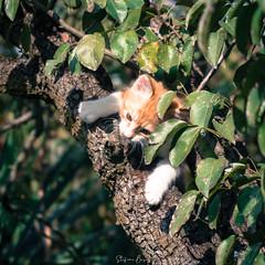 Hold on!!! (stefanobosia) Tags: cat pet holdon pets nature tree determination determinazione fujifilm xt20 gatto albero animali