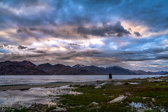 A nature lover (Mohan.Singh) Tags: pangong lake ladakh