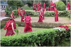 INDIA Sikkim (Suriaa) Tags: monastery sikkim india budda lama