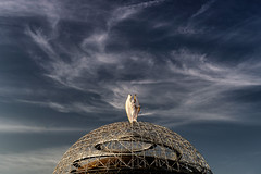 """Raphael"" (helmet13) Tags: d800e raw italy milano ospedalesanraffaele cupola sculpture raphael archangel sky clouds building architecture simplicity heaven aoi peaceaward platinumpeaceaward world100f"