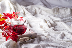 Hot healthy rose tea on wooden tray with autumn fallen leaves on knitted warm woolen blanket. Relaxing in cold weather on the bed. Seasonal beverages. (lyule4ik) Tags: tea autumn bed cold cozy cup drink fall home hot mug winter woolen background concept healthy leaf rustic table weather wooden alternative aroma beverage care citrus detox disease fever flu ginger green health herb herbal homeopathy honey ingredient lemon medicine natural organic raw remedy root sick spice sweet water yellow