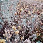 kluane lake [salt plants] thumbnail