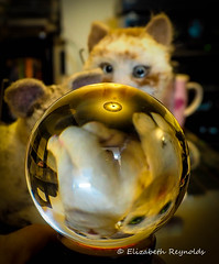 Day 276. (lizzieisdizzy) Tags: table tabletop reflections reflection reflective reflect crystal glass globe ball upsidedown toy toycats craft