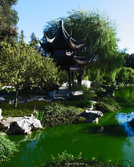 Chinese Garden, pagoda (markjwyatt) Tags: huntingtonlibrary sanmarino pasadena california chinese garden pond trees pagoda rocks