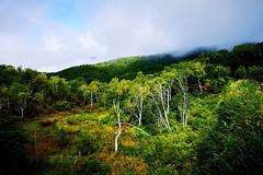 Light and Shadow (tez-guitar) Tags: highland pond wood forest tree sky shinshu nagano huawei leica