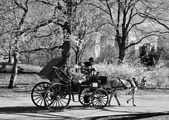 Riding in style (Historical67) Tags: carriage newyork nyc manhattan centralpark blackandwhite monochrome monochromemonday horse explored inexplore