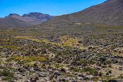 Andes, height 4650 / Анды, высота 4650 (Vladimir Zhdanov) Tags: travel peru andes altiplano landscape nature mountains mountainside alpaca stone grass animals sky snow mountain
