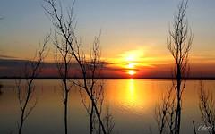 """___ spazio all'emozione! -- """" in explore """" (erman_53fotoclik) Tags: mediacom s501 tramonto sunset laguna piante profili neri cielo riflesso sole astro stella emozione spazio orizzonte erman53fotoclik"""