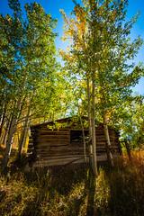 North Park Cabin (CTfotomagik) Tags: seasons northpark colorado autumn forest aspens trees foliage colors abandoned logcabin jacksoncounty wideangle nikon fall