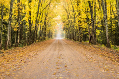 Backroads (Aaron Springer) Tags: michigan upperpeninsulaofmichigan woodland forest trees leaves autumn fall october fallfoliage outdoor nature landscape