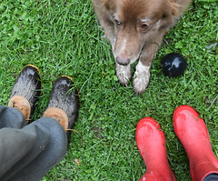 Three Pairs (Happy Autumn Everyone!!!) Tags: ddc 2536 feet shoes black red paws stu me shizandra ball inthebackyard