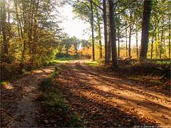 _herfst (l--o-o--kin thru) Tags: cycling gravelbike achterhoek winterswijk nl nederland