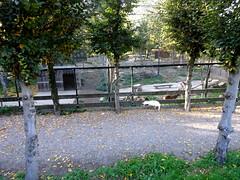 born_055 (OurTravelPics.com) Tags: born mouflons bird kasteelpark zoo