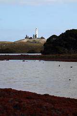 Light on the hill (Paul Threlfall) Tags: lighthouse wadjemuplighthouse rottnestisland wa westernaustralia ducks pinklake samphires clouds sky