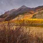 Fall Colors along Bishop Creek thumbnail