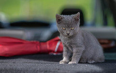 Kika (04) (Vlado Ferenčić) Tags: kitty kittens vladoferencic vladimirferencic catsdogs cats animals animalplanet zagorje hrvatska croatia nikond600 nikkor8518 pets klenovnik