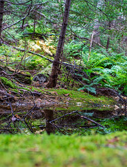 Reflections (Clif Budden) Tags: 2018 bowringpark canada environment nl nature newfoundland october outdoors stjohns