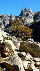 Korsika (S.Garten) Tags: thebeautyofnature magic moments i love nature sun silence tree moutains hills stone blue sky rock leaves korsika
