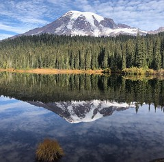 A perfect day at Mt. Rainier, Washington [1334x750] [OC] by lauren5392 (-WildPigs-) Tags: reddit earth