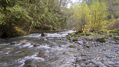 Dungeness River 0015 (All h2o) Tags: dungeness river forks pacific northwest olympic peninsula national forest mountains hasselblad camera dji mavic pro two drone tree water trees autumn fall season rock landscape creek stream