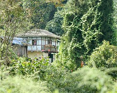 House in Pelling (Nagarjun) Tags: pelling sikkim northeastindia greenery nature village walk ruralindia nepali