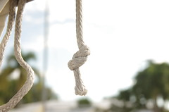 Dyneema Stopper Knot (erluko) Tags: knot line marine maritime rope dyneema stopper palmtrees sigma1750mmf28exdchsm smileonsaturday knotsobad tropical dutchman