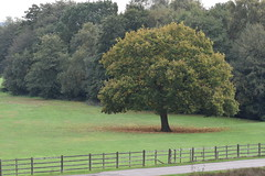 Sutton Park - Autumn (Mikon Walters) Tags: uk britain england sutton coldfield park west midlands birmingham forest wood woods woodland land tree trees autumn leaf leaves fall grass field bush bushes fence nikon d5600 sigma 105mm photography