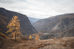 Chulyshman valley (filin__sergey) Tags: mountain mountainrange hill valley scenery mountainpeak peak ridge scenic landscape landscapes rock chulyshmanvalley chulyshman russia showmerussia mountains mountainscapes nature wild travel autumn sony sonya7 sonyalpha sonya7s