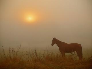 ONE HORSE BY SUNRISE _8287191