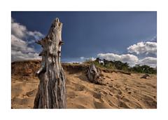 Boswachterij Dorst C (cees van gastel) Tags: ceesvangastel canoneos550d sigma1020mm landscape luchten landscapes skies clouds wolken zand trees bomen dorst duinen dunes stumps treestumps stronken boomstronken