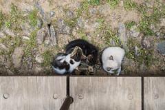 Sleeping Kittens (oz_lightning) Tags: animals europe granada heritage sonyrx100iii spain unescoworldheritage worldheritage cat patterns andalusia esp