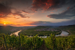 Moselle Intoxication (ludwigriml) Tags: bushes evening moselschleife pink river sunset sunstar town vineyard bowtie church germany grapes horseshoebend leiwen loopbow mosel moselhorseshoebend moselwine moselewine moselle mosellevalley orange outdoors ribbon summer trees trittenheim vines viniculture viticulture warmlight winary wine winegrowing rhinelandpalatinate de