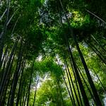 Bamboo forest of Hokoku-ji Temple in Kamakura : 報国寺の竹林(鎌倉市浄明寺) thumbnail