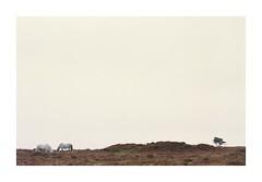 Exmore Horses (Piers Muiry) Tags: nikon portra 400 35mm film 135 england devon exmore national park wild horses ferral minimalism tree grass