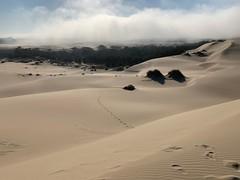 (Gary Sharp) Tags: iphonexs fog sanddunes hiking oregon dellenbacktrail