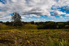 Champ de fougères (Keres Jasminka) Tags: france paysage auvergne pré champ fougère ciel nuage campagne nature extérieur été