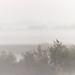 Camargue Mist