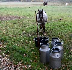 (:Linda:) Tags: germany thuringia village bürden horse milkchurch four