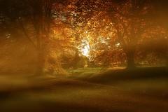 The Gold park ... (Julie Greg) Tags: park nature nautre gold tree trees way landscape leaf leafs kent england colours texture grass road