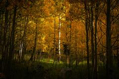 Fall Foliage Light (Bernie Duhamel) Tags: fall fallfoliage colorado bernie duhamel sonya7riii sony2470mm greatphotographers frontrange teamsony rockymountains