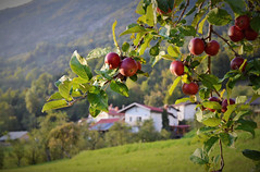 Spätsommertag (!Claro) Tags: slovenia kobarid drezniskeravne nature beauty silence autumn fall lastdaysofsummer thanksgiving ifeelslovenia countryside landscape mountains