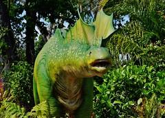 Amargasaurus cazaui, Adult (Susan Roehl) Tags: naplesbotanicalgardens naples florida usa amargasauruscazaui dinosaur animatronic reptile herbivore genussauropod earlycretaceous fossilsfoundinargentina discoveredin1984 virtuallycomplete 30to33feetlong large butsmallforasauropod 2parallelrowsoftallspikes downneckandback display combat ordefense sueroehl panasonic 12x35mmlens handheld