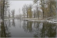 Grey day by the pond (geelog) Tags: fishcreekprovincialpark winter fog leicaq