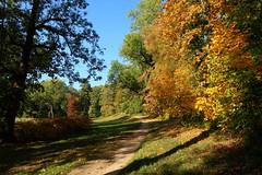 Chateau park in Kostelec nad Orlicí (ZdenHer) Tags: chateau park kostelec autumn trees path landscape sky czechrepublic canonpowershotg7xmarkii tree road grass