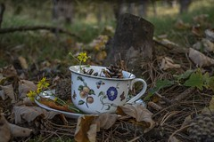 Autumn Inspiration (Fenjav) Tags: autumn leaves nature dunes forest flowers pinecones