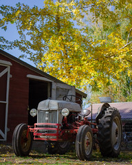 Tractors&Chickens&Fall-19 (sammycj2a) Tags: cubcadet whitecrestedblackpolish chickens snowman ford ford8n northogden gardentractor cubcadet104 redbelly nikon nikonnofilter nikkor chickencoop fallcolors