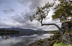 Lake shore tree (G V Fennell) Tags: cumbria derwentwater keswick lake lakedistrict landscape lonetree nikond810 reflections trees water
