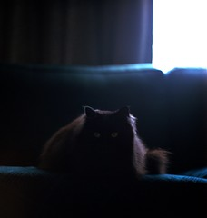 Bubu Eyes (spiritusmentis) Tags: rolleiflex 28f carlzeiss 80mm f28 planar fuji fujifilm pro 400h film 6x6 mediumformat portland oregon black cat maine coon bubu