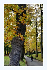 avenue (overthemoon) Tags: utata:project=tw654 thursdaywalk phone frame switzerland suisse schweiz svizzera romandie vaud lausanne parcmonrepos autumn trees fallcolours leaves